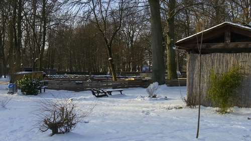 Bild Tierpark Winter 2